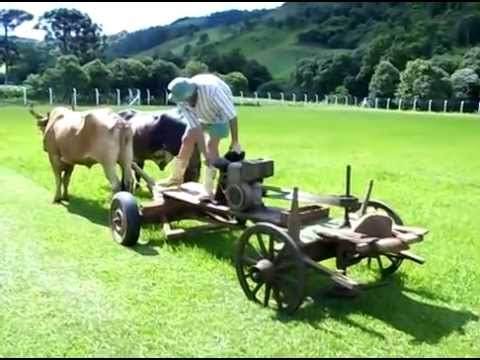 Rasenmäher mit Ochsenantrieb